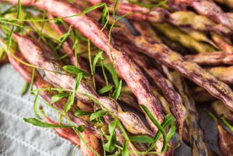 Mesquite Beans (Seeds + Pods)