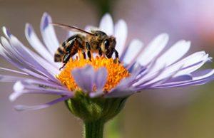 honey-bee-340x220